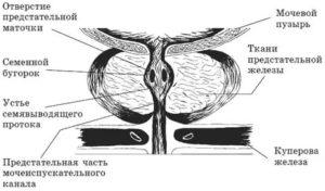 Лечение простатита по методу малахова