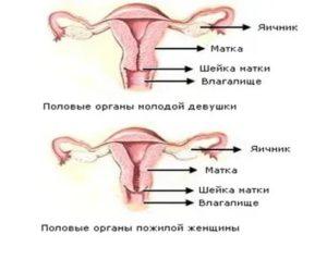 Шейка матки положение при климаксе