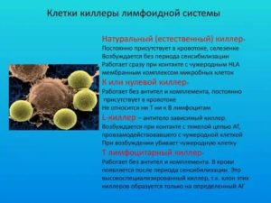 Клетки киллеры при бесплодии